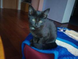 Kleines schwarzes Katzenbaby abzugeben!