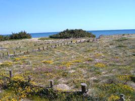 Foto 14 Kleines .Ferienhaus  für 2 Pers.,400 m zum  Sandstrand, imax.2 Pers., Apulien, San Pietro in Bevagna