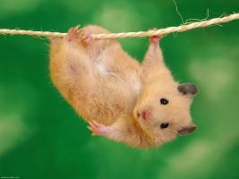 Foto 2 Kleintierbetreuung Hund-Katze-Hase-Ratten-Hamster-Vögel ec.