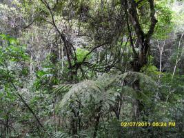 Foto 2 Klimaschutz