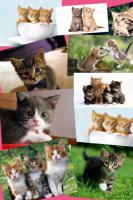 Kommt Ihr Katzenfutter schon zu Ihnen?