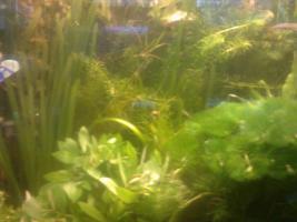 Komplette Bepflanzung für 500 Liter Aquarium, 70 Bund Wasserpflanzen