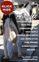 Foto 9 Kuh Pferd Bulle uvm. als Attrappe  … www.dekomitpfiff.ch
