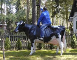 Kuh, Holstein, ''Adelchen'', schwarz weiss, Kopf links, 270cm / HAEIGEMO  Artikel-Nr.: 2285