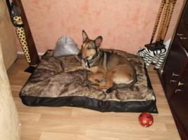 Foto 4 Kuschel Hündin ''Cleo'' aus dem Tierschutz sucht Zuhause bei Ihnen!
