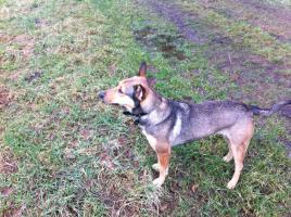 Foto 8 Kuschel Hündin ''Cleo'' aus dem Tierschutz sucht Zuhause bei Ihnen!