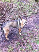 Foto 9 Kuschel Hündin ''Cleo'' aus dem Tierschutz sucht Zuhause bei Ihnen!