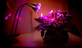 LED Grow Pflanzenlampe für Zimmerpflanzen |10w Doppelte Ein / Aus Schalter Clip Schreibtisch Lampe mit 360 ° flexible Schwäne