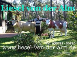 LIESEL VON DER ALM - DEKO KUH LEBENSGROSS TEL: 033767 - 30750