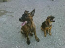 LORENZO - unser hübscher Hundejunge