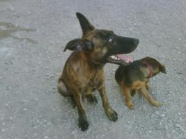 Foto 2 LORENZO - unser hübscher Hundejunge