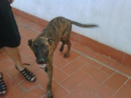 Foto 3 LORENZO - unser hübscher Hundejunge