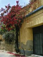 Foto 4 LOTZORAI: ERINNERUNG AN DIE BURG MEDUSA - Aparthotel Stella dell'est