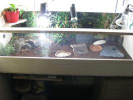 Foto 2 Landschildkröten Futter & Saatgut