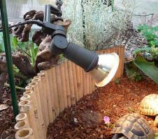 Foto 3 Landschildkröten Futter & Saatgut