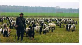 Landwirtschaftlicher Betriebshelfer
