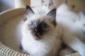 Liebe Katzen für liebe Menschen