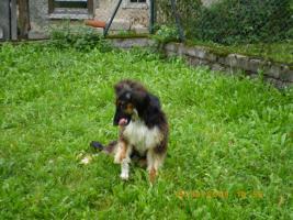 Foto 2 Lieben Hund