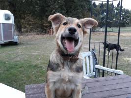 Foto 4 Liebenswerte anhängliche freundliche schöne+gesunde Hunde