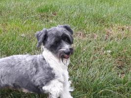 Foto 9 Liebenswerte anhängliche freundliche schöne+gesunde Hunde