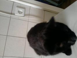 Foto 3 Liebevolle Hauskatze