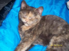 Foto 2 Liebevolle Katzenkinder