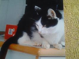 Foto 3 Liebevolle Tierbetreuung
