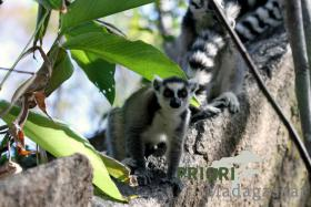Madagaskar - Reisen vom Spezialisten 2018