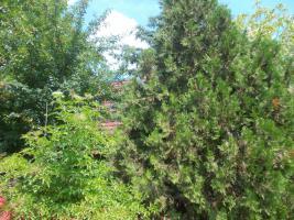 Foto 12 Magyarországon Tamásiban eladó nyaraló-hétvégiház-tanya