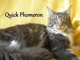 Foto 4 Maine Coon Kitten mit Staubaum