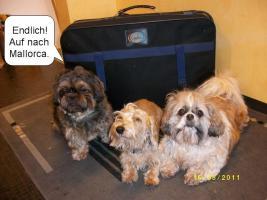 Mallorca-Urlaub mit Hund ( Haustier )