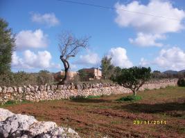 Foto 3 Mallorca-Urlaub mit Hund ( Haustier )