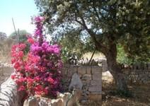 Foto 5 Mallorca, Finca Son Covas für 4 - 8 Personen