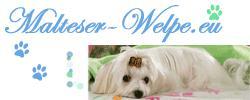 Malteser-Welpe.eu Hunde-Community