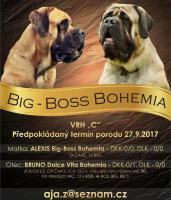 Mastiff Zwinger Big-Boss Bohemia