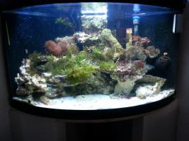 Foto 2 Meerwasserbecken nur Inhalt oder komplett Becken mit Technik