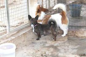 Foto 2 Mischling DUC sucht ein Zuhause oder PS