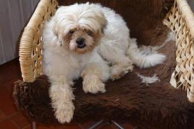 Foto 3 Mischlingshund