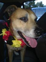 Mischlingshund abzugeben gegen Schutzgebühr und Schutzvertrag!