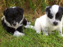 Foto 3 Mischlingshunde
