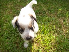 Foto 6 Mischlingshunde