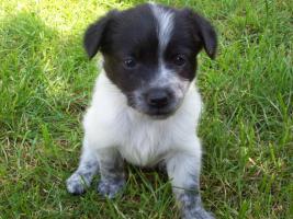 Foto 7 Mischlingshunde