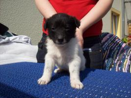 Foto 8 Mischlingshunde