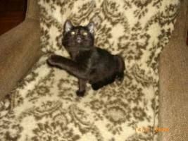 Mischlingskatzen