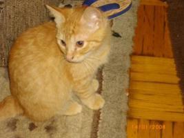 Foto 3 Mischlingskatzen