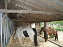 Mit Ihrem Pferd zusammen Wohnen!