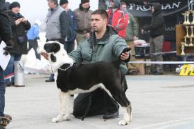 Foto 4 Mittelasiatische Schäferhund