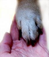 Mobile Hundetraining ''WunderWeltHund''