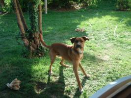 Foto 2 Mobiles Hundetraining bei Ihnen zuhause !!