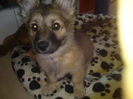 Foto 2 Möchte mein 4 Monate alten hundewelpen in liebevolle hände angeben